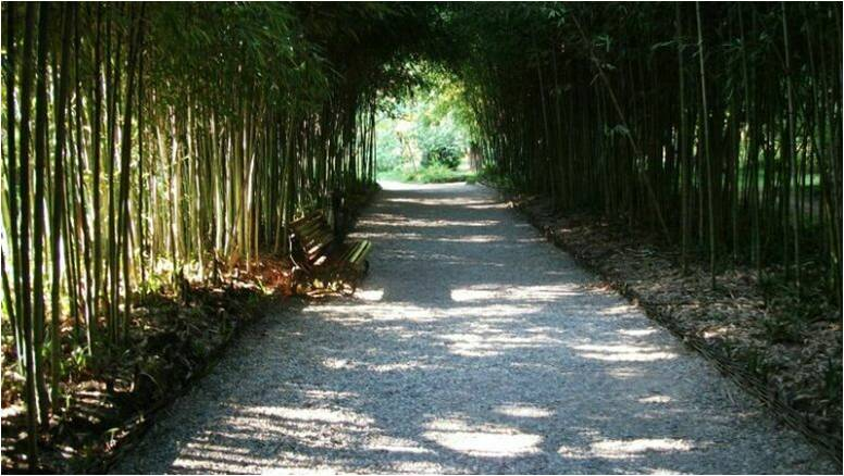 Столетняя бамбуковая аллея