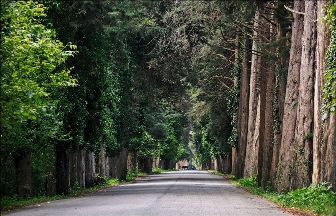 Живописные тоннели Пицундской рощи