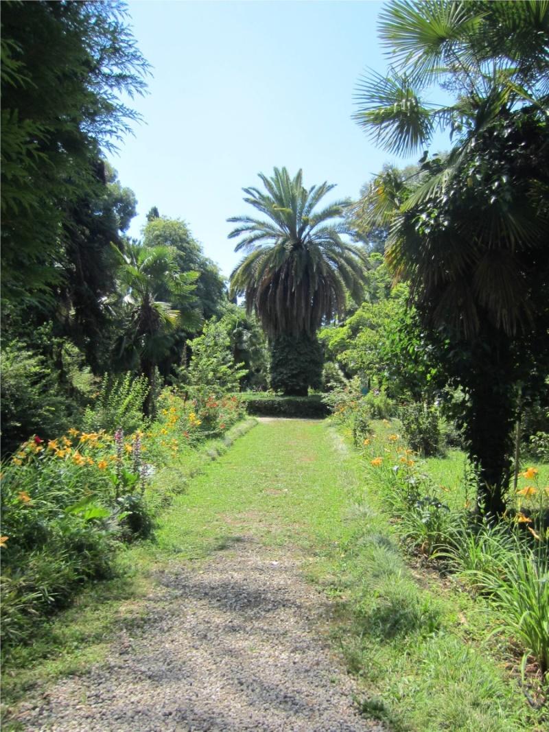 Тихие дорожки Ботанического сада Сухума