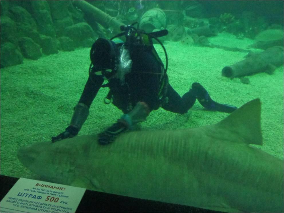 Кормление акул – зрелище не для слабонервных