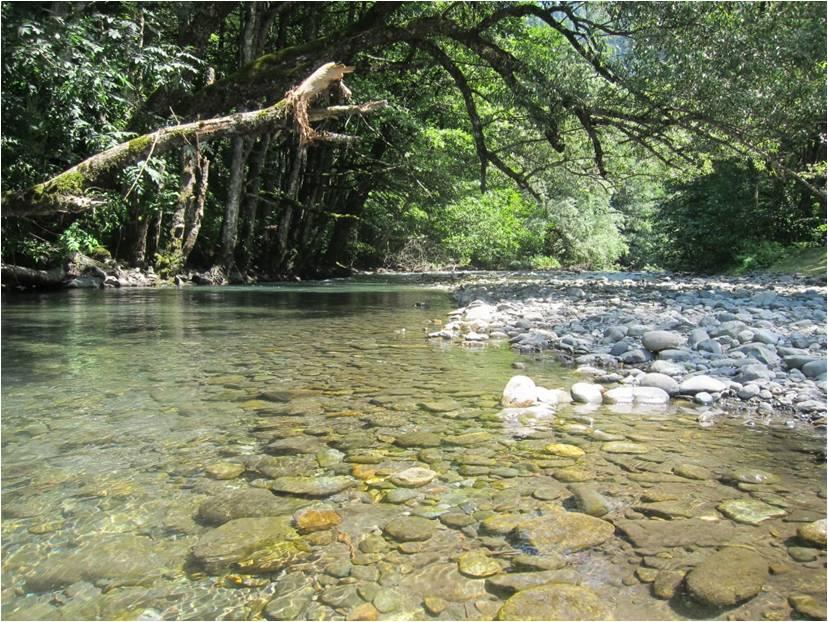 Впадающая в Рицу река Лашипсе