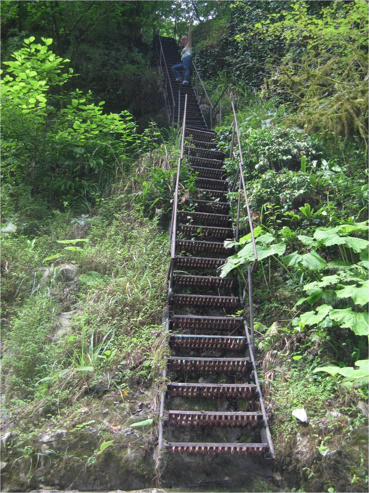 Вниз по лестнице в зеленую пасть каньона