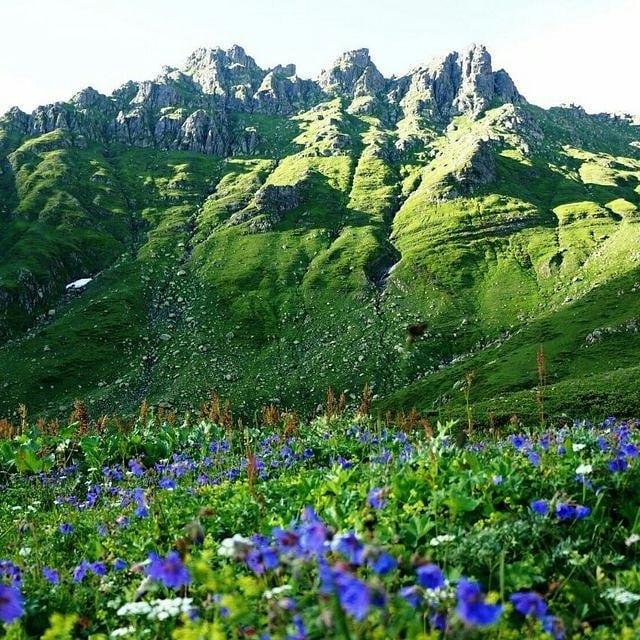 Яркие краски альпийских лугов